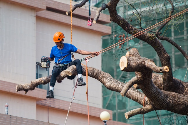 Best Tree Services in Toronto