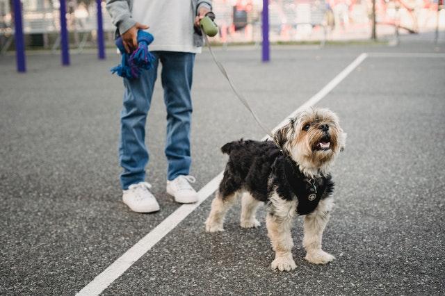 5 Best Dog Walkers in Vancouver