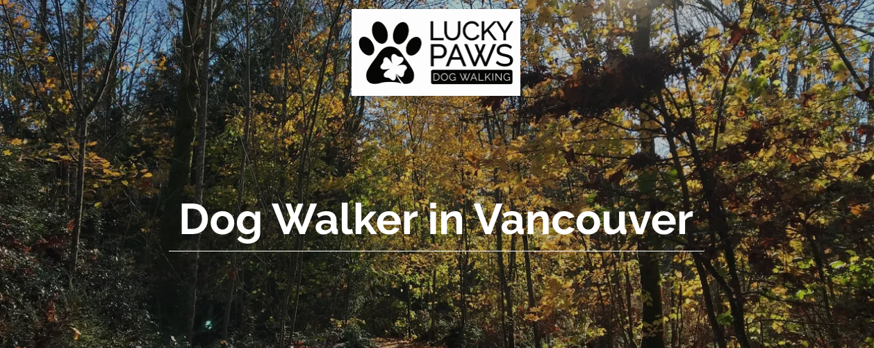 top vancouver dog walking services