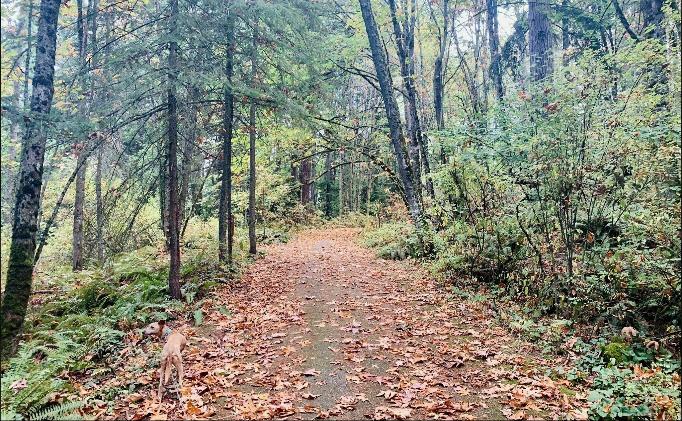 hiking trails in calgary