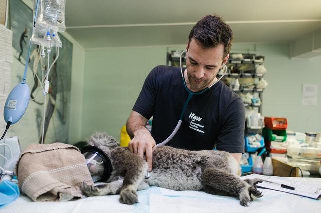 5 Best Veterinarians in Vancouver