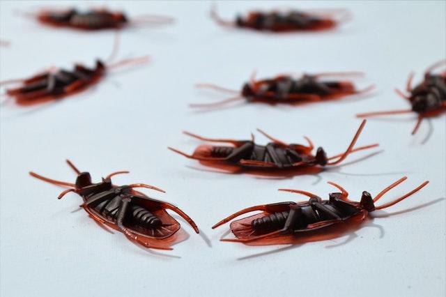 Best Exterminators in Vancouver