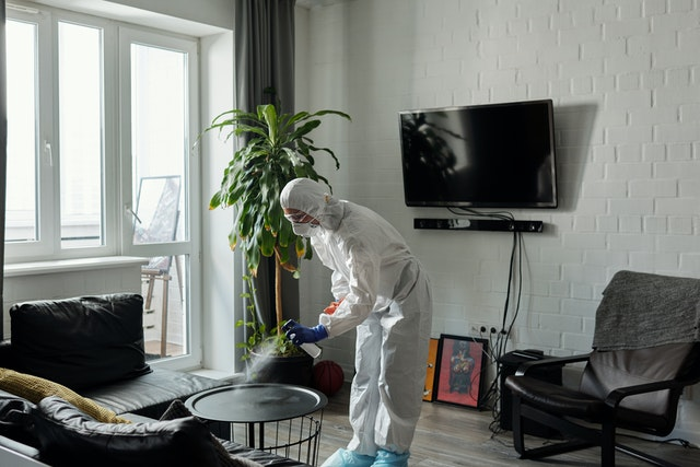 5 Best Pest Control Companies in Toronto