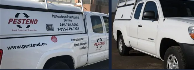 toronto pest control companies