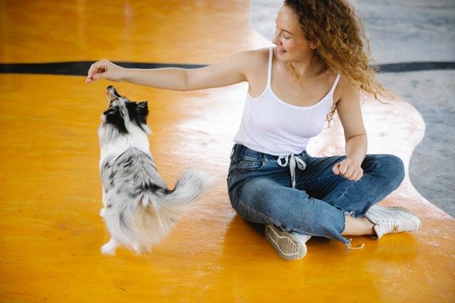 Pet Care Centers in Winnipeg